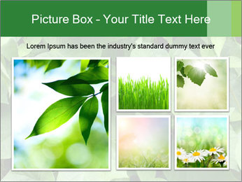 Green Foliage In Garden PowerPoint Template - Slide 19