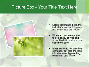 Green Foliage In Garden PowerPoint Template - Slide 20