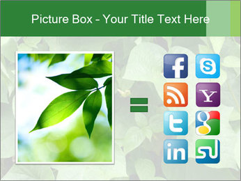 Green Foliage In Garden PowerPoint Template - Slide 21