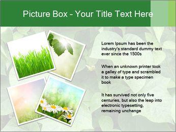 Green Foliage In Garden PowerPoint Template - Slide 23