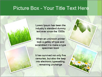 Green Foliage In Garden PowerPoint Template - Slide 24