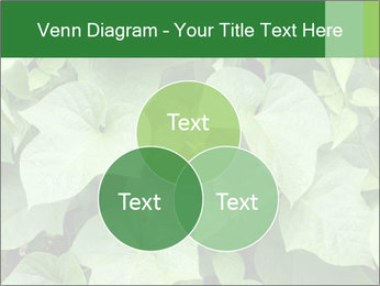 Green Foliage In Garden PowerPoint Template - Slide 33