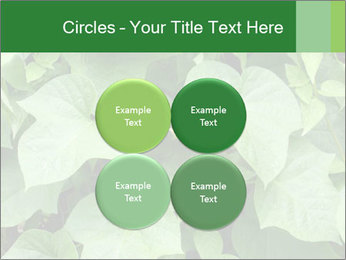 Green Foliage In Garden PowerPoint Template - Slide 38