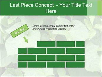 Green Foliage In Garden PowerPoint Template - Slide 46
