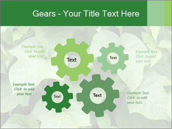 Green Foliage In Garden PowerPoint Template - Slide 47