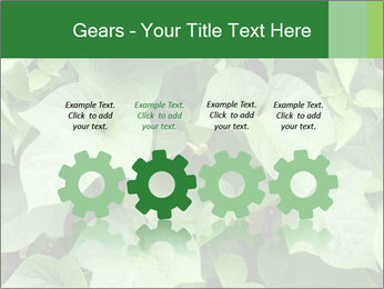 Green Foliage In Garden PowerPoint Template - Slide 48