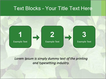 Green Foliage In Garden PowerPoint Template - Slide 71