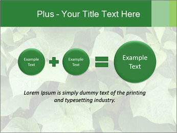 Green Foliage In Garden PowerPoint Template - Slide 75