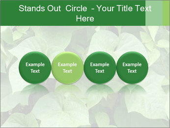 Green Foliage In Garden PowerPoint Template - Slide 76