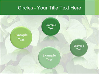 Green Foliage In Garden PowerPoint Template - Slide 77