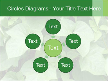 Green Foliage In Garden PowerPoint Template - Slide 78