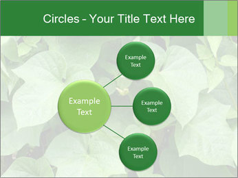 Green Foliage In Garden PowerPoint Template - Slide 79