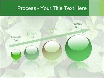 Green Foliage In Garden PowerPoint Template - Slide 87