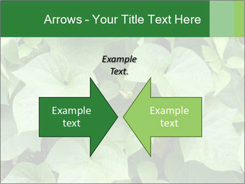 Green Foliage In Garden PowerPoint Template - Slide 90