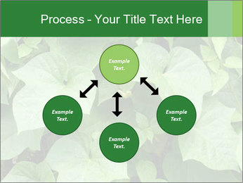Green Foliage In Garden PowerPoint Template - Slide 91