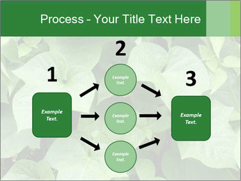 Green Foliage In Garden PowerPoint Template - Slide 92
