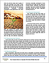 0000089185 Word Template - Page 4