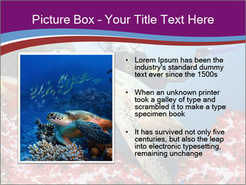Diving Experience PowerPoint Template - Slide 13