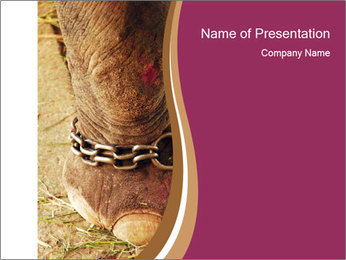 Chain For Elephant PowerPoint Template - Slide 1