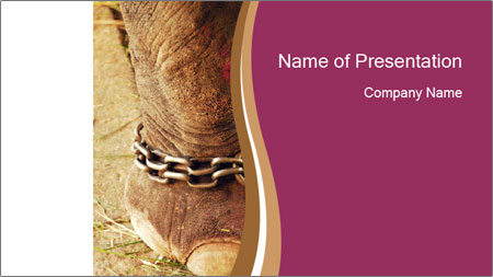 Chain For Elephant PowerPoint Template