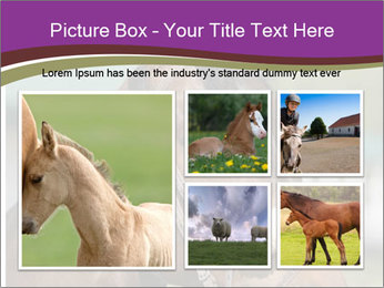 Horse Farm PowerPoint Templates - Slide 19