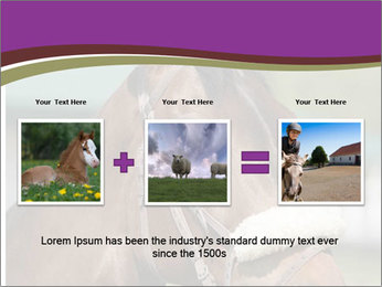 Horse Farm PowerPoint Templates - Slide 22