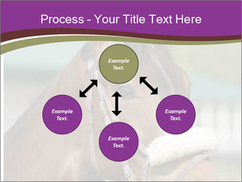 Horse Farm PowerPoint Templates - Slide 91