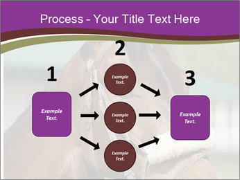 Horse Farm PowerPoint Templates - Slide 92