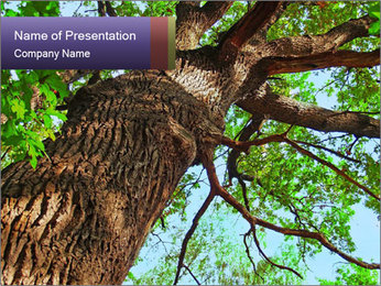Old Oak PowerPoint Template - Slide 1
