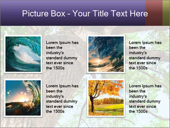 Old Oak PowerPoint Template - Slide 14