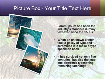 Old Oak PowerPoint Template - Slide 17