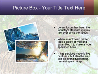 Old Oak PowerPoint Template - Slide 20