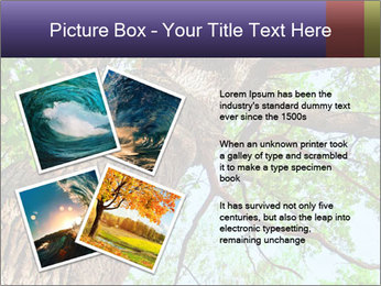 Old Oak PowerPoint Template - Slide 23
