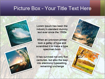 Old Oak PowerPoint Template - Slide 24