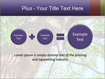 Old Oak PowerPoint Template - Slide 75