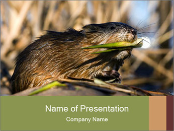 Green Spring PowerPoint Template - Slide 1