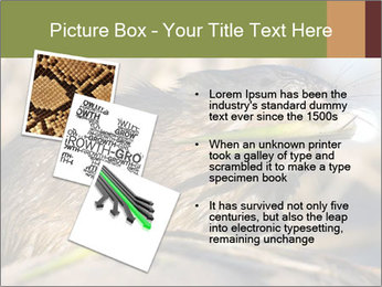 Green Spring PowerPoint Template - Slide 17