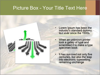 Green Spring PowerPoint Template - Slide 20