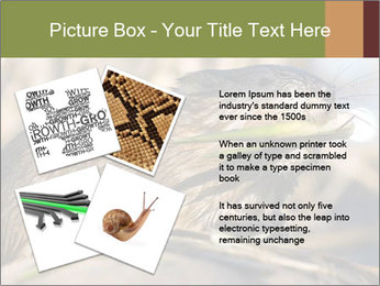 Green Spring PowerPoint Template - Slide 23