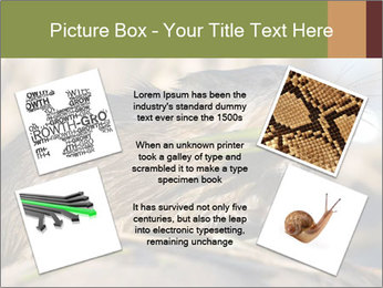 Green Spring PowerPoint Template - Slide 24