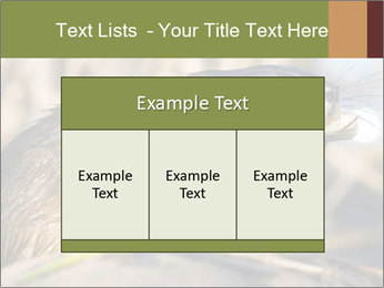 Green Spring PowerPoint Templates - Slide 59