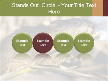 Green Spring PowerPoint Template - Slide 76