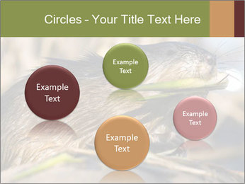 Green Spring PowerPoint Template - Slide 77