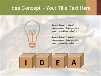 Green Spring PowerPoint Template - Slide 80