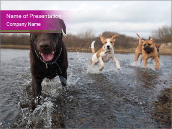 Three Running Dogs PowerPoint Template - Slide 1