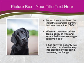 Three Running Dogs PowerPoint Template - Slide 13