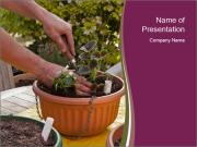 Pot Plant PowerPoint Template