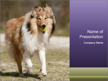 Great Collie Dog PowerPoint Template - Slide 1