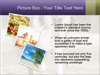Great Collie Dog PowerPoint Template - Slide 17