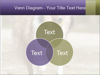 Great Collie Dog PowerPoint Template - Slide 33
